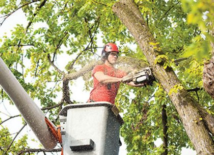 Why and When to prune your trees