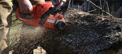 Tree Services – Inspection and Trimming