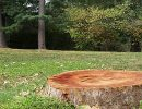 Hire professionals to remove a tree stump and roots