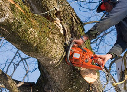 Hire Professional Tree Care Services for a More Beautiful Garden