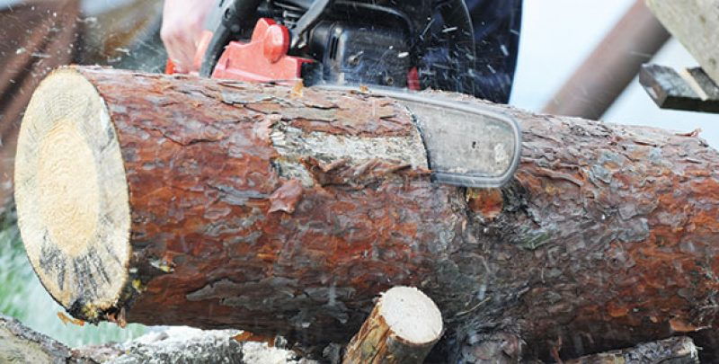 Identifying the Best Tree Removal Services