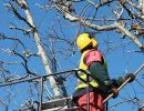 Start your Own Tree Service Company