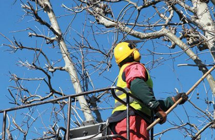Tree Pruning – Focusing On Certain Seasonal Factors
