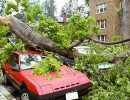 Why remove big trees in your backyard before storm season?
