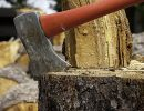 What a Tree Service Company Can Do For You?